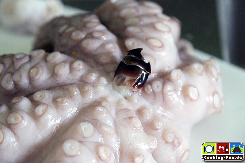 Oktopus Schnabel